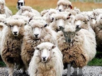 Τα πρόβατα με το λύκο