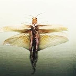 «Τραφείτε με έντομα»
