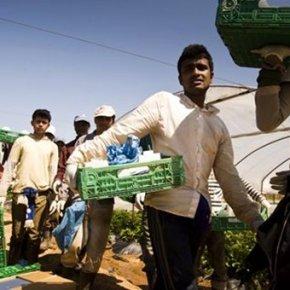 """Ισλαμοφασίστες επιστάτες έσφαξαν εργάτες στην Μανωλάδα – Που είναι οι""""ευαίσθητοι"""";"""