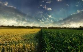 ΣΟΚ: Αλβανίδα υπήκοος διεκδικεί ενοίκια από αγροκτήματα εκατοντάδων γεωργών στηνΠέλλα