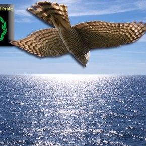 Το φιλέρημο γεράκι – Όταν η ιδέα έγινε θύελλα – Αντίστροφη μέτρηση – Μέτρα τα φώτα – Γεράκια θάλασσας – Κράτα την ανάσα σου – Η μη αναστρέψιμη υπόσχεση – Όταν πετάξαμε στη θάλασσα – Στα θεμέλια τουουρανού