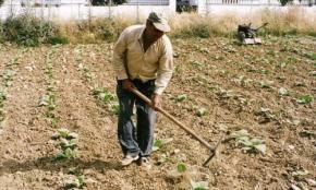 Η συρρίκνωση της Ελληνικής αγροτικής παραγωγήςσυνεχίζεται..