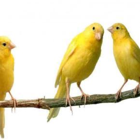 Ποιο…πουλάκι που μιλάει κυνηγάνε στοΓΕΕΘΑ;