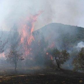 Πυρκαγιά στη Μυτιλήνη κοντά σε στρατιωτικές εγκαταστάσεις- Σε συναγερμό ηΠυροσβεστική