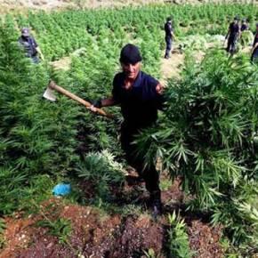 Έμπορος Ναρκωτικών ο Αλβανός Υπ. Εσωτερικών – Τον Καλύπτει οΡάμα