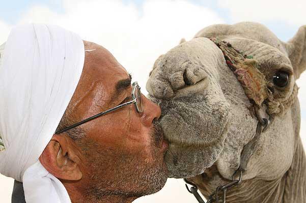 Camel_Kiss
