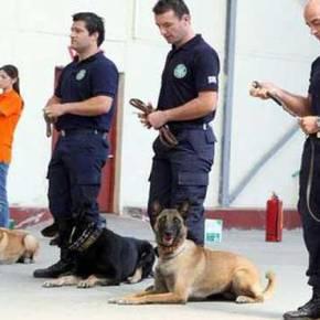 Ετσι εκπαιδεύονται τα σκυλιά της ΕΛ.ΑΣ(βίντεο)