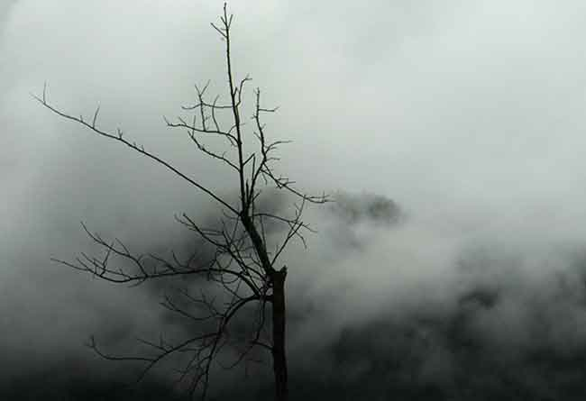 Dying-Tree