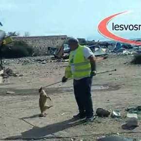 ΦΡΙΚΗ ΣΤΗ ΛΕΣΒΟ! Μετανάστες μάζευαν και έτρωγαν τα αδέσποτα σκυλιά(Βίντεο)