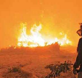 ΕΘΝΙΚΗ ΚΑΤΑΣΤΡΟΦΗ! Στο 90% η απώλεια από την πυρκαγιά στις καλλιέργειες τωνμαστιχόδεντρων