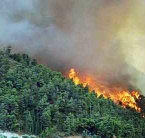 ΑΝΕΞΕΛΕΓΚΤΗ Η ΦΩΤΙΑ ΣΤΗ ΘΑΣΟ: Εγκλωβίστηκαν βουλευτές του ΣΥΡΙΖΑ – Κάηκαν σπίτια, τραυματίστηκεπυροσβέστης!