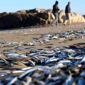 Δεν είναι αστείο – Στον Πόντο βγήκαν τα ψάρια στηστεριά!