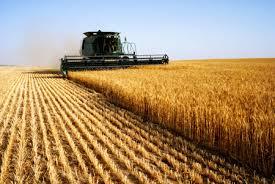 Για ποια ελληνική αγροτική παραγωγήμιλάμε;