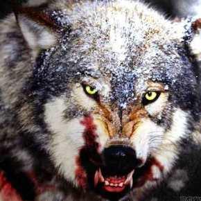 Οι Τούρκοι τώρα μυρίζουν την αδυναμία μας, όπως ο λύκος τοαίμα