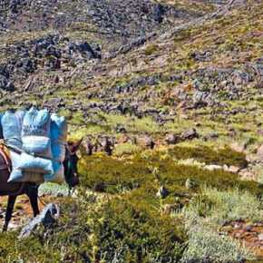 Οι Αλβανοί θερίζουν τον Γράμμο! Οργανωμένες επιδρομές από συμμορίες – Λεηλατούν τα δάσημας