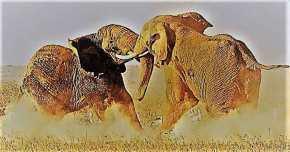 Όταν οι ελέφαντες παλεύουν το γρασίδιυποφέρει