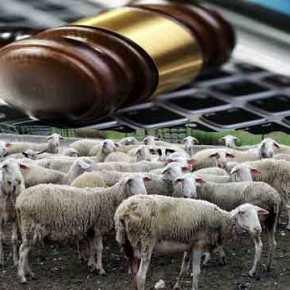 ΠΛΑΚΑ ΚΑΝΕΙΣ…;;; Γρεβενά: Βγάζουν σε ηλεκτρονικό πλειστηριασμό… 200πρόβατα